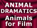 visit to Animaldramatics website